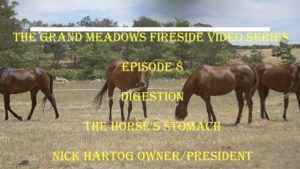 Fireside Chat - Episode 8 - Digestion - The Horse's Stomach