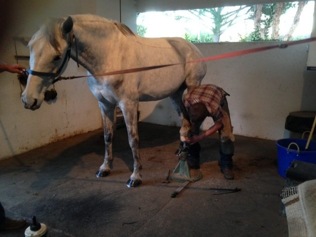 farrier-shoeing-horse