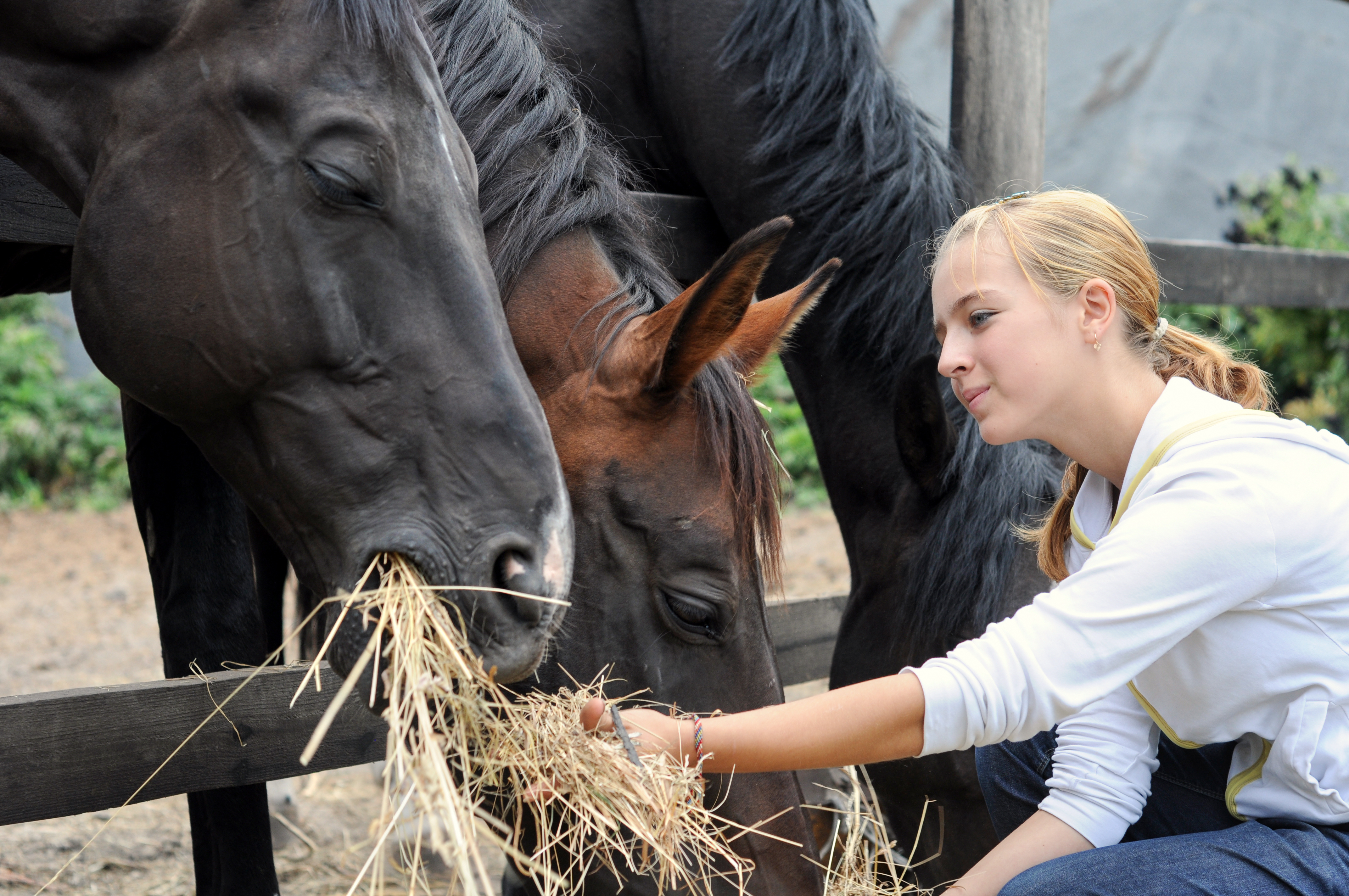 Hay for Your Horses Just Isn't Enough