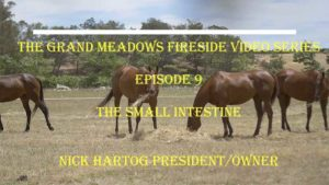 Fireside Chat - Episode 9 - Digestion - The Small Intestine