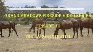 Fireside Chat Video 10 – Digestion - The Large Intestine