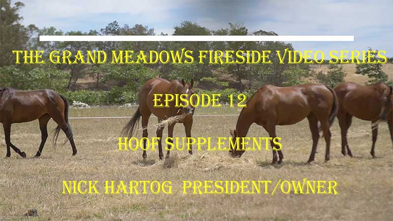 Grand Meadows Fireside Chat - How to Select a Hoof Supplement