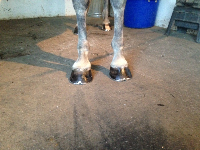 healthy-horse-hooves