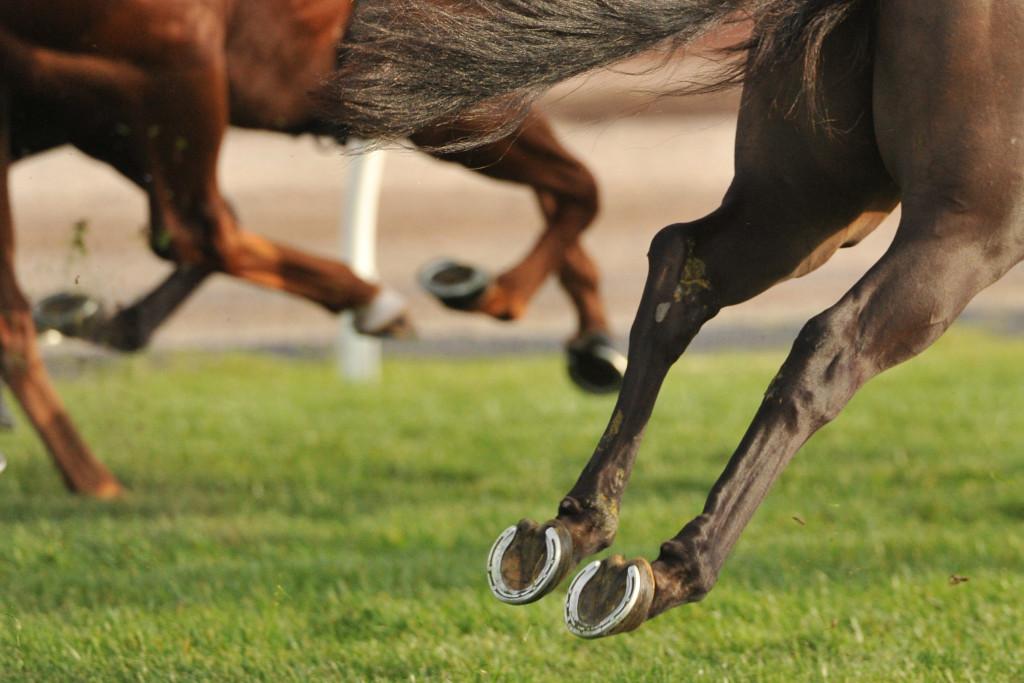 Horse Wearing Shoe