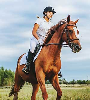 What Are The Best Horse Supplements?