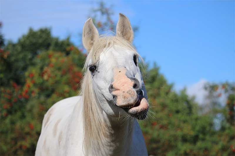 Horses Don't Like Taste of Supplements