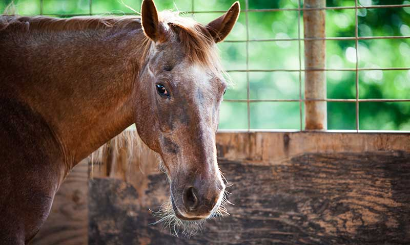 Managing the Senior Horse
