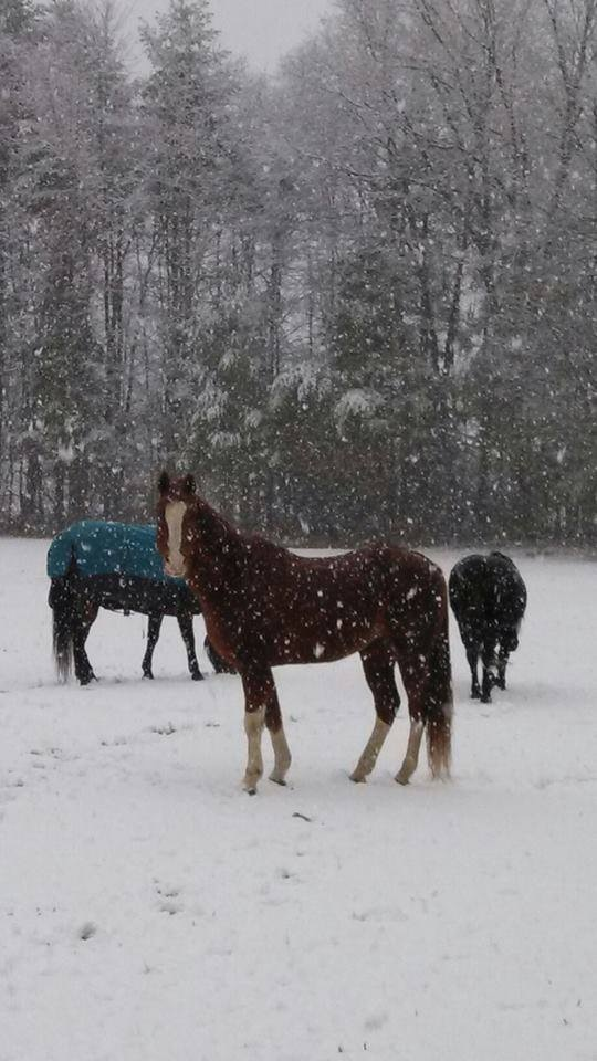 Blanketed Horses at Pasture